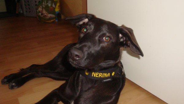 nerina1