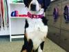 Edelweiss Hundehalsband