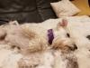 Hundehalsband Suki 02