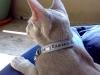 Leder Katzenhalsband mit Swarovski
