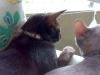 Katzenhalsband Leder