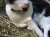 Katzenhalsband Catlife Patfinder 02