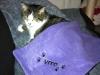 Katzenkuscheldecke