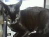 Namens Katzenhlasband