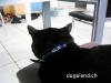 Katzenhalsband
