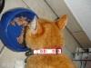 Reflex Katzenhalsband bestickt