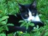 Katzenhalsband reflektierend
