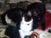 Katzenhalsband bestickt