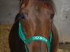 Pferdehalfter grün