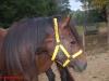 Pferdehalfter gelb