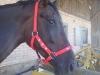 Pferdehalfter mit Name