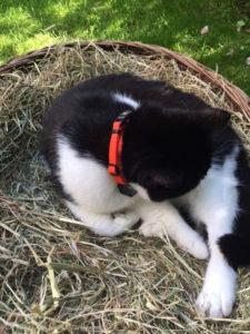 Katzenhalsband Catlife Patfinder 01