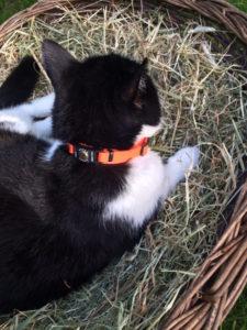 Katzenhalsband Catlife Patfinder 03