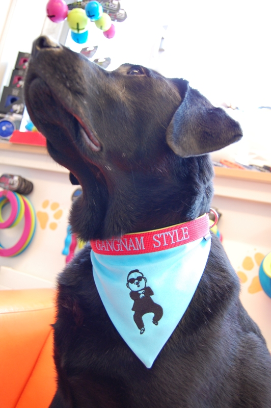 Hundehalstuch Gangnam Style