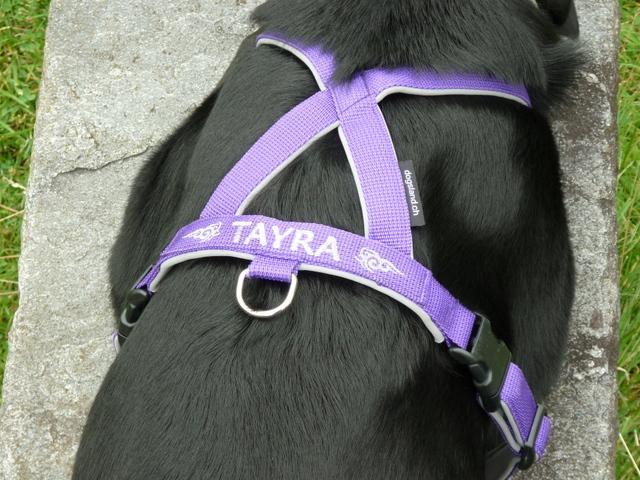 tayra-03