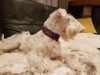 Hundehalsband Suki05