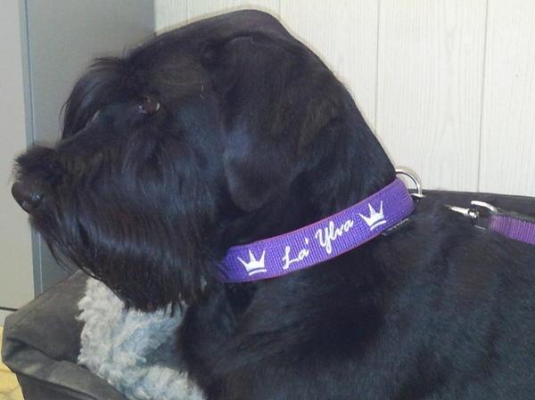 Hundehalsband bestickt