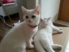 Samira und Naila Katzenhalsband
