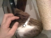 Katzenhalsband mit Name und Tel,
