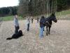 Pferdehalfter schwarz