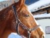 Pferdehalfter