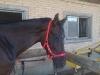 Pferdehalfter mit Neopren