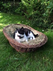 Katzenhalsband Catlife Patfinder 04